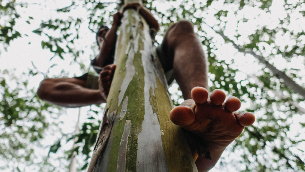 It's easy to exercise for happiness, climb a tree. Close up of a bare foot looking up at a person climbing a tree.